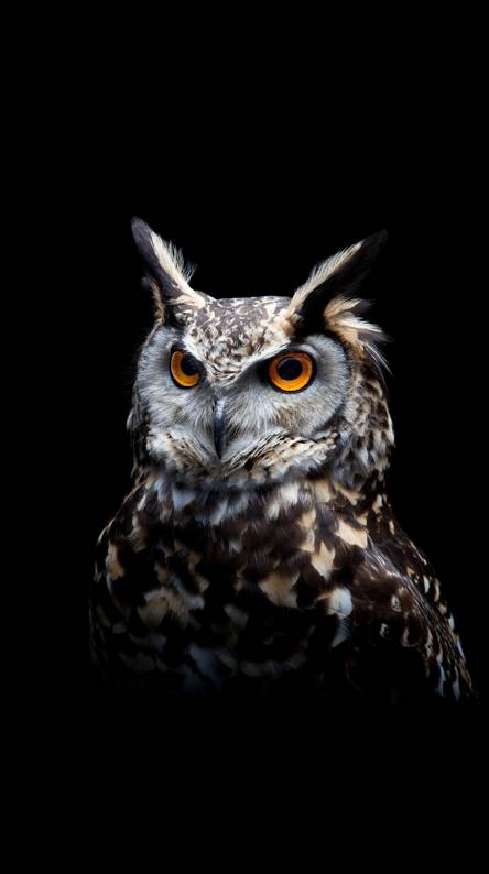 Owl Wallpapers Free By Zedge