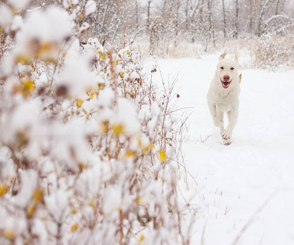 Puppy on Ice