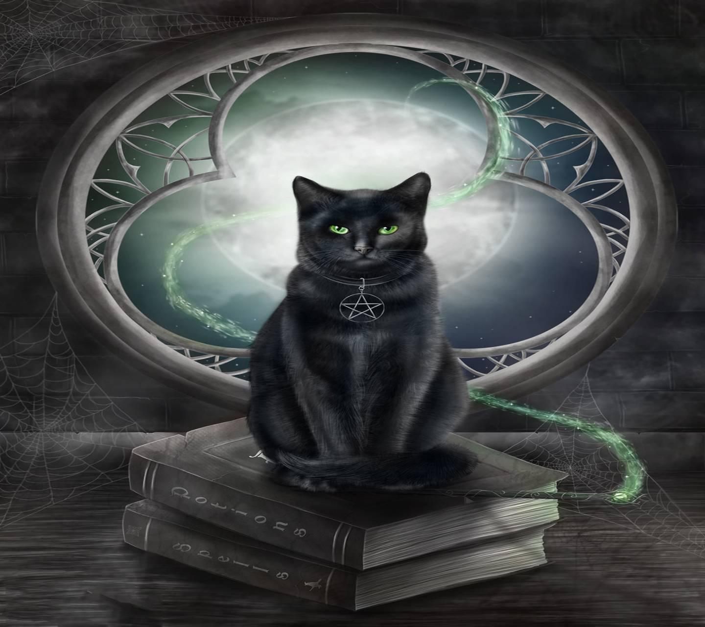 zedge cat katten zobj fsa gekke zwarte source kat