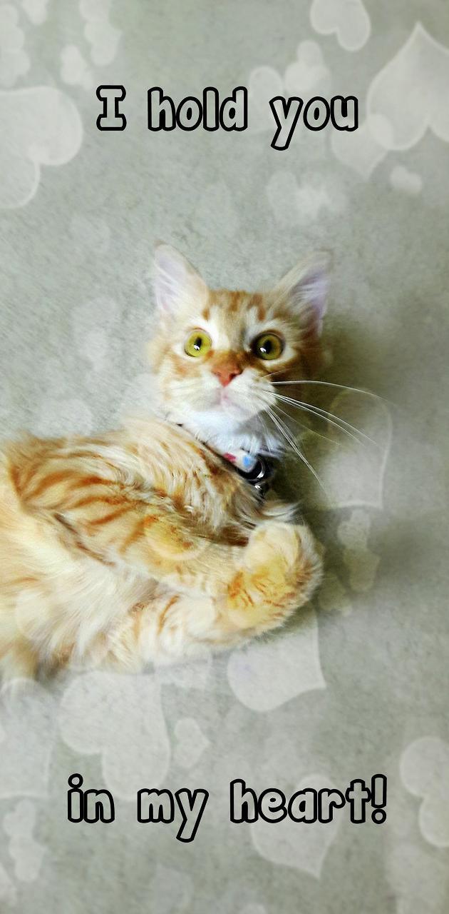 In My Heart Cat