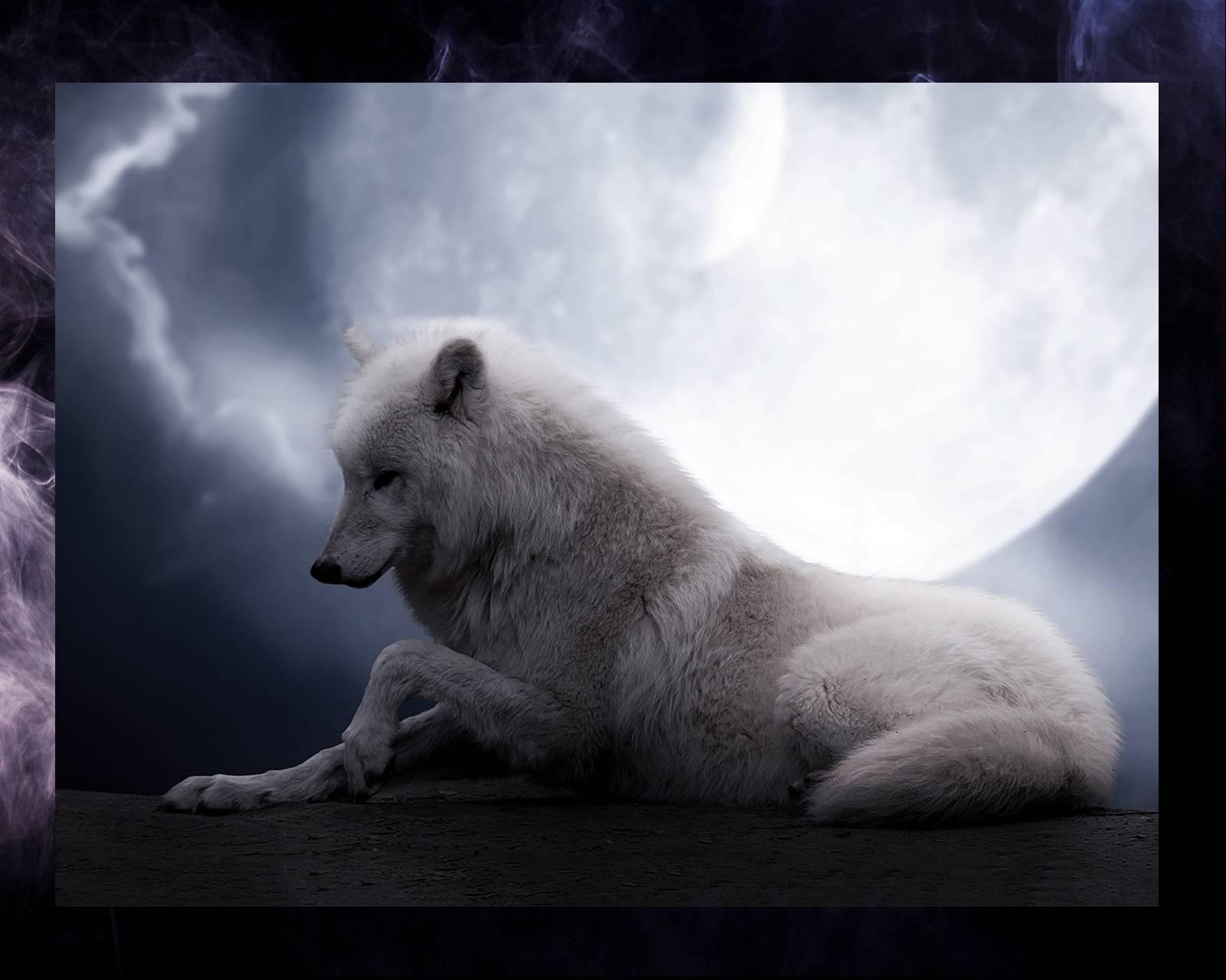 Madam Wolf