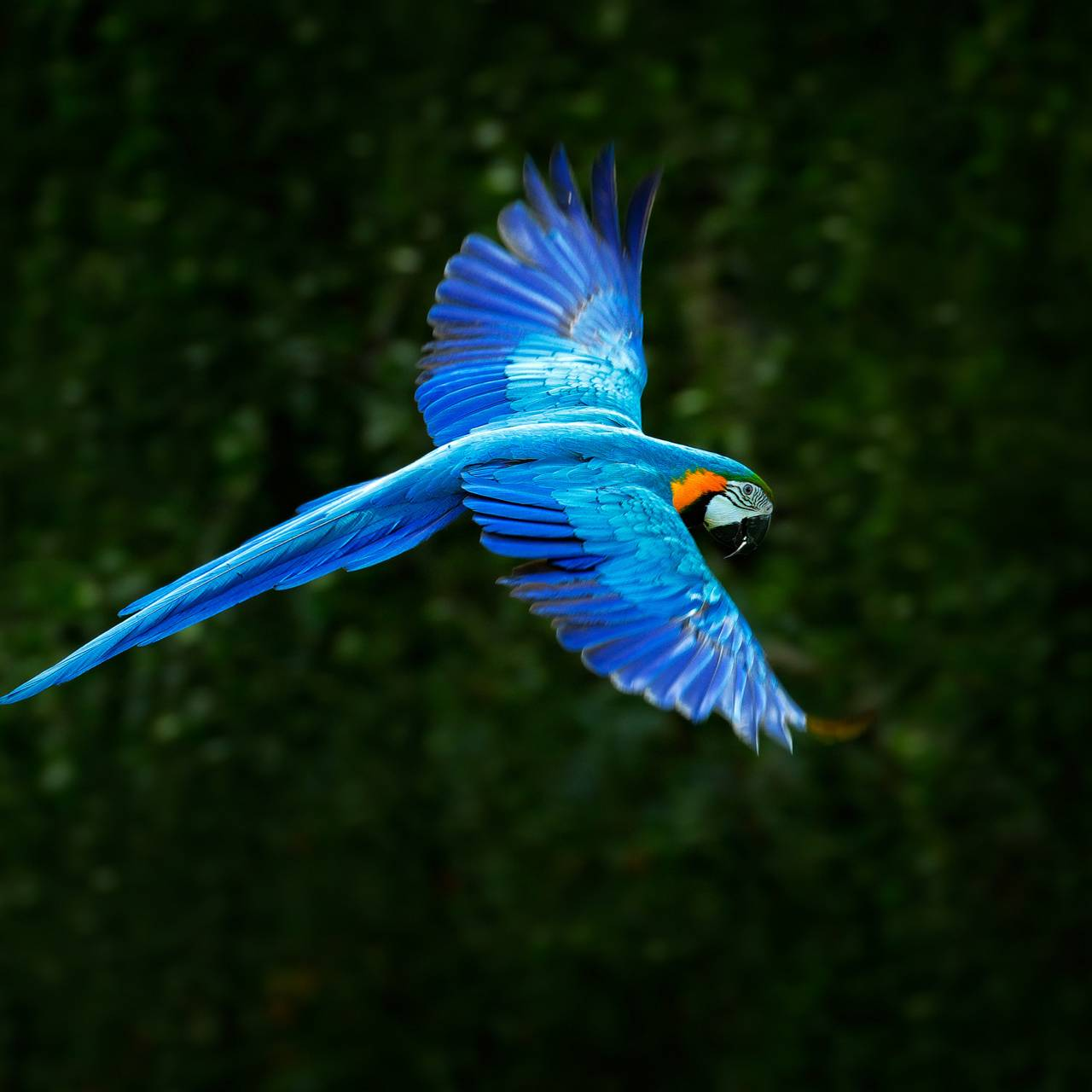 Awesome Parrot