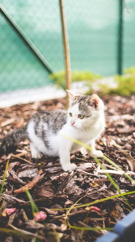Kitten in the yard