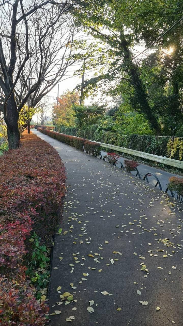 japon road