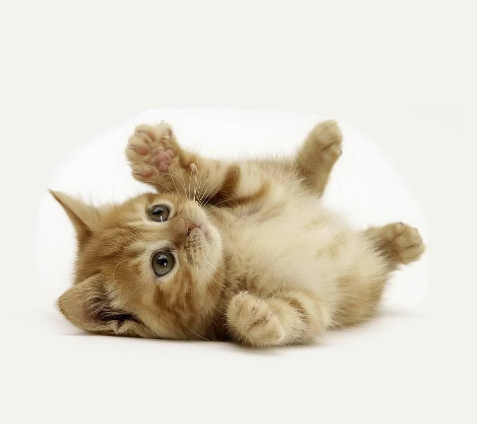 Cut Kitten