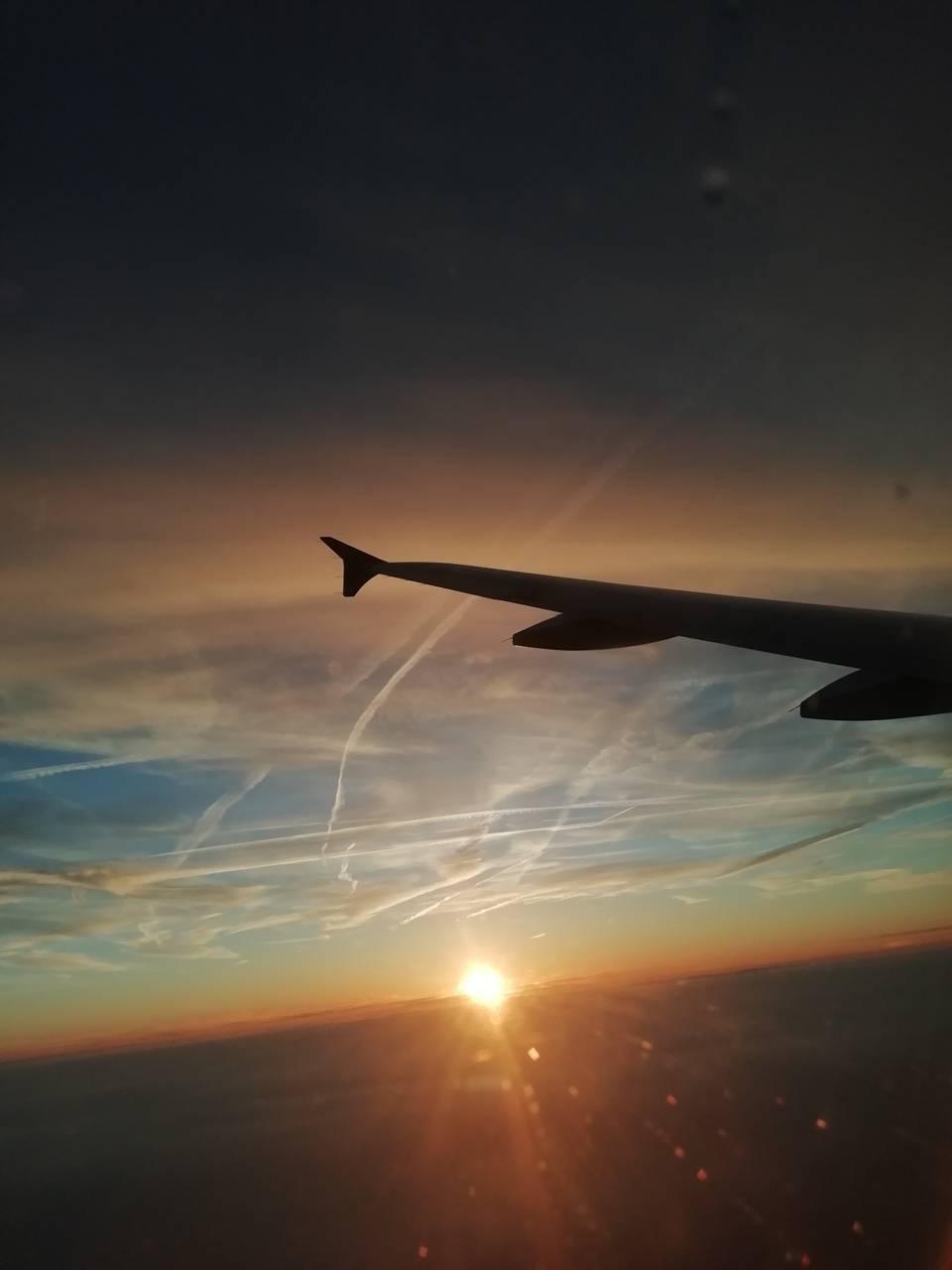 Beautiful wing