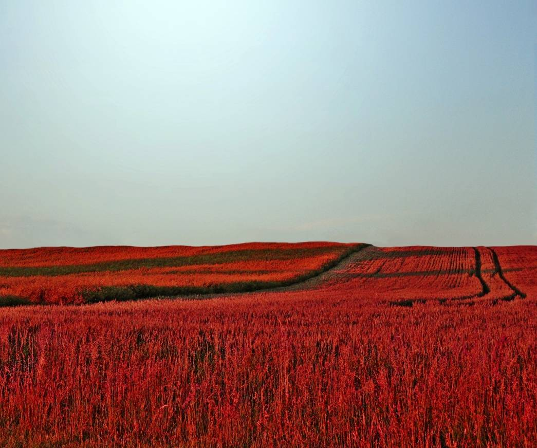 Field View Hd