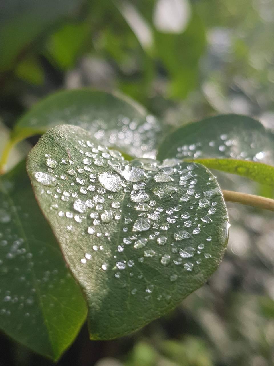 Morning Dew-tiful