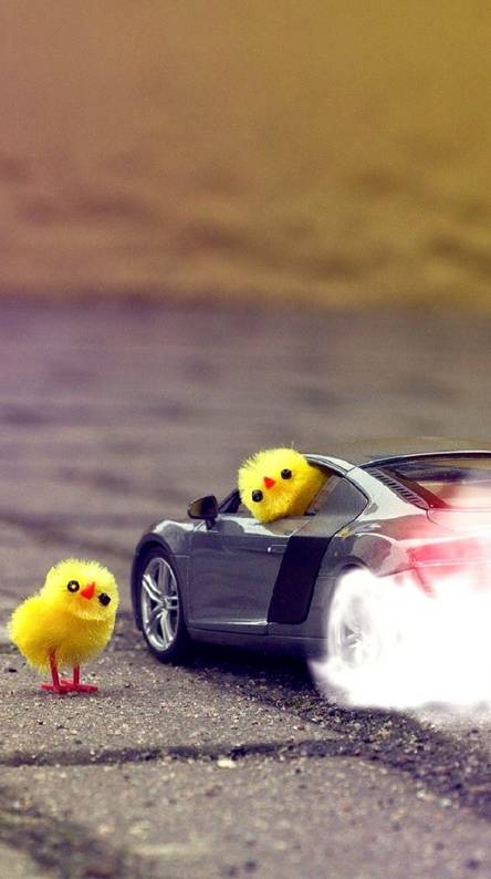 muscle car chickens