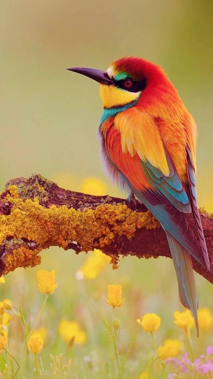 Just bird