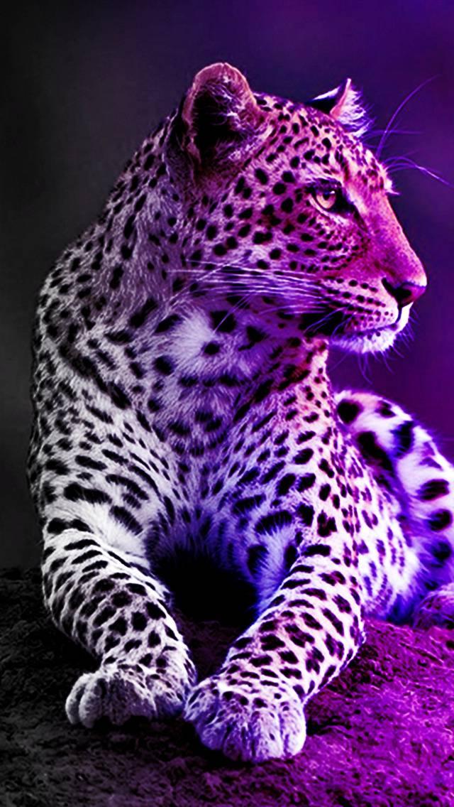 Leopard Shadows