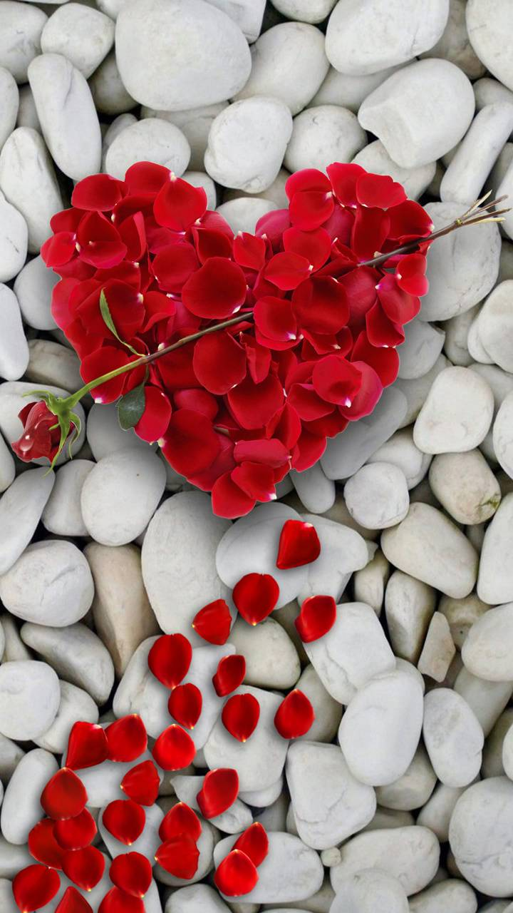 heart of rose