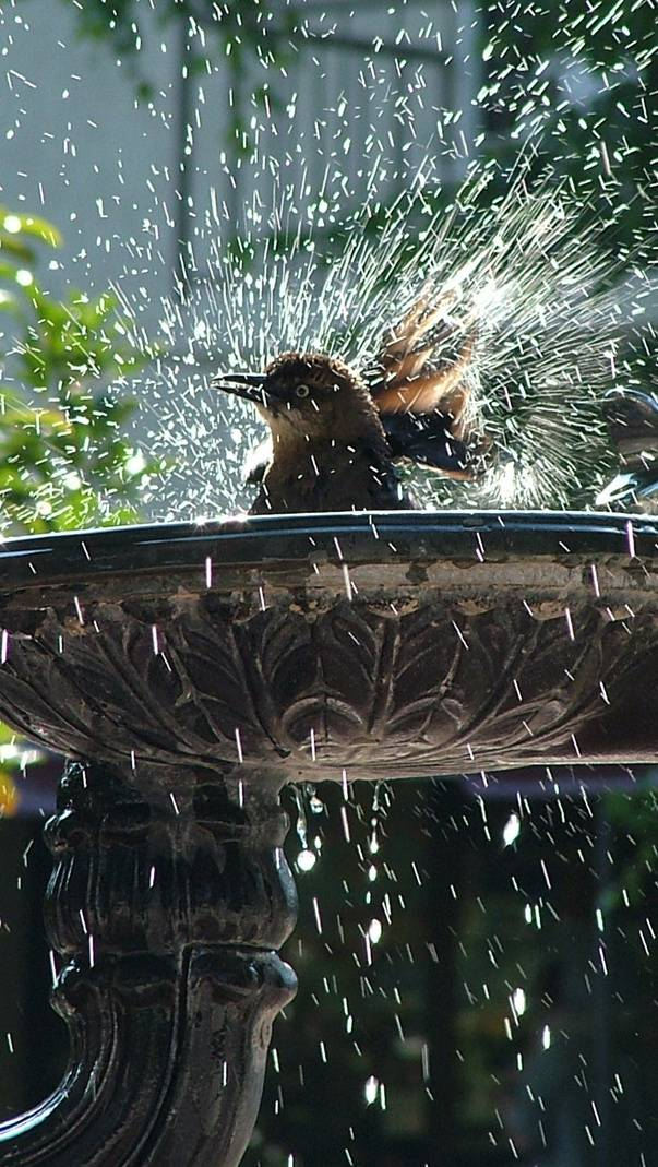 Bird Shower
