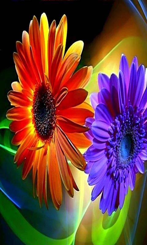 Super Hd Flowers