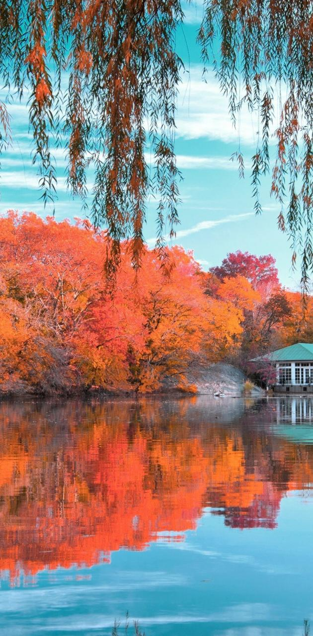 Colorfully nature