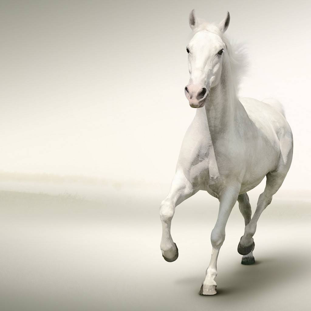 White Horse Wallpaper By Sonia 54 Free On Zedge