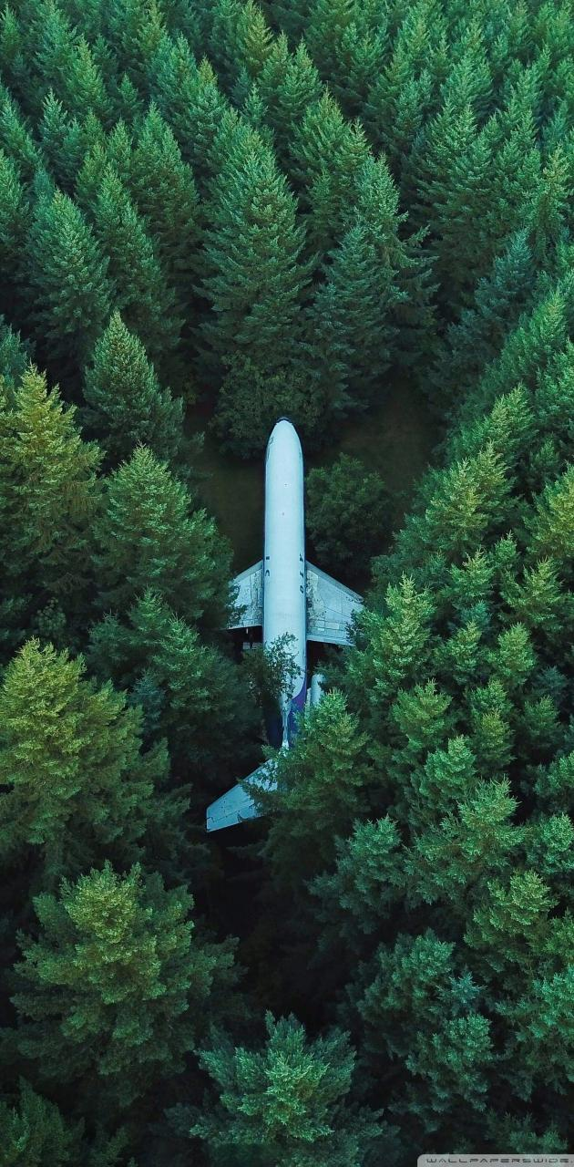 Aeroplane in forest