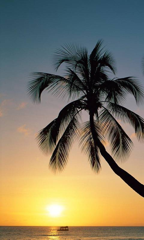 palm tree nature