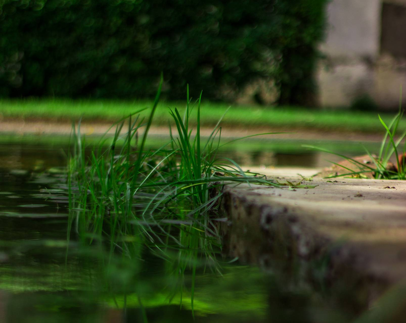 Grass in the water