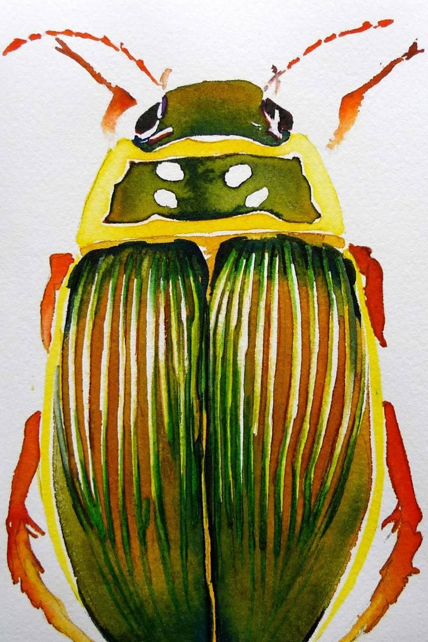 Watercolour Beetle