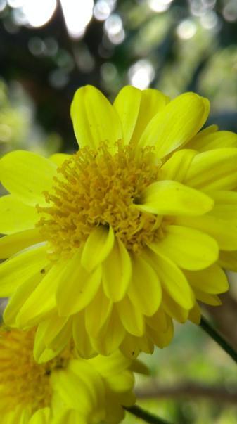Flower skb