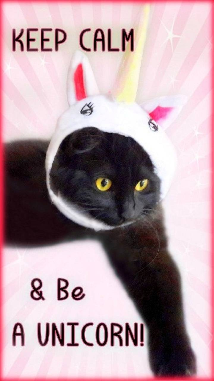 Be a UNICORN Cat