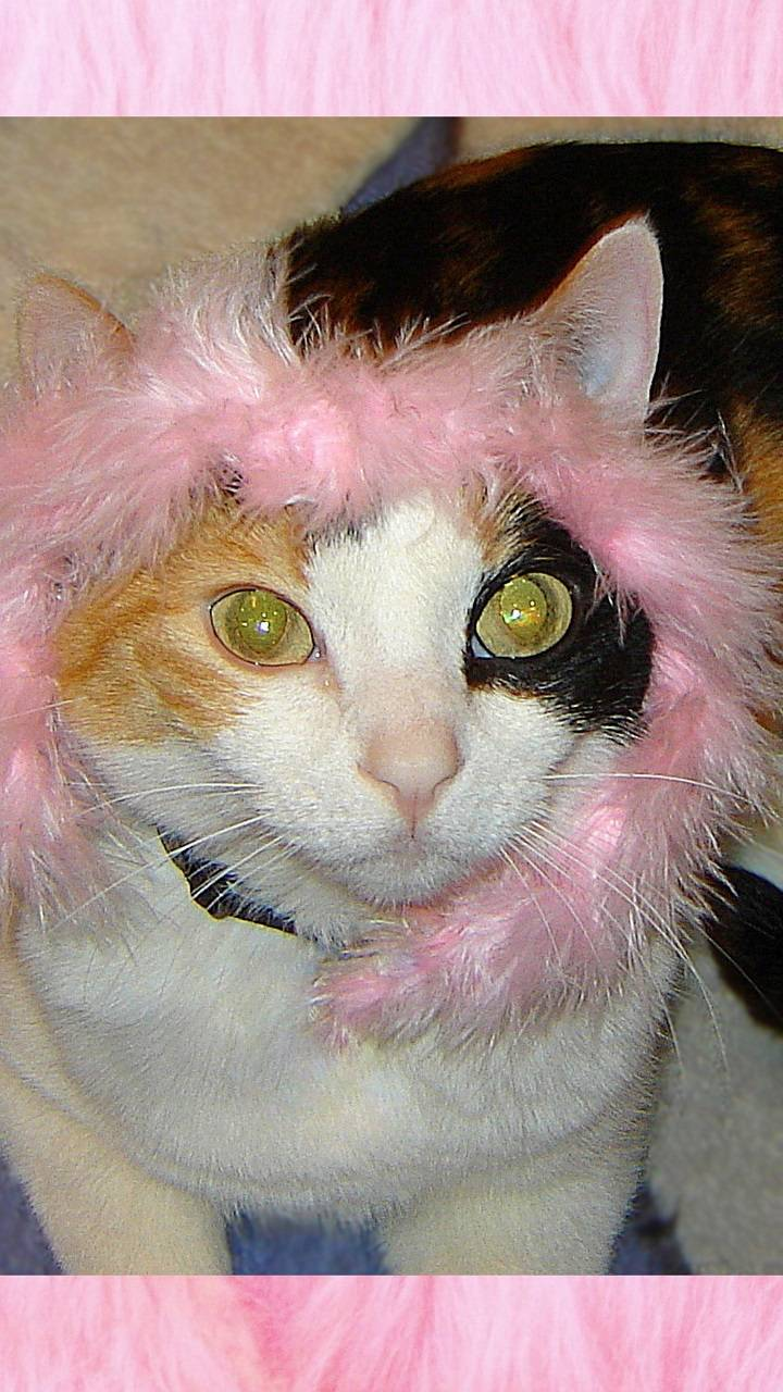 Feather Face Cat