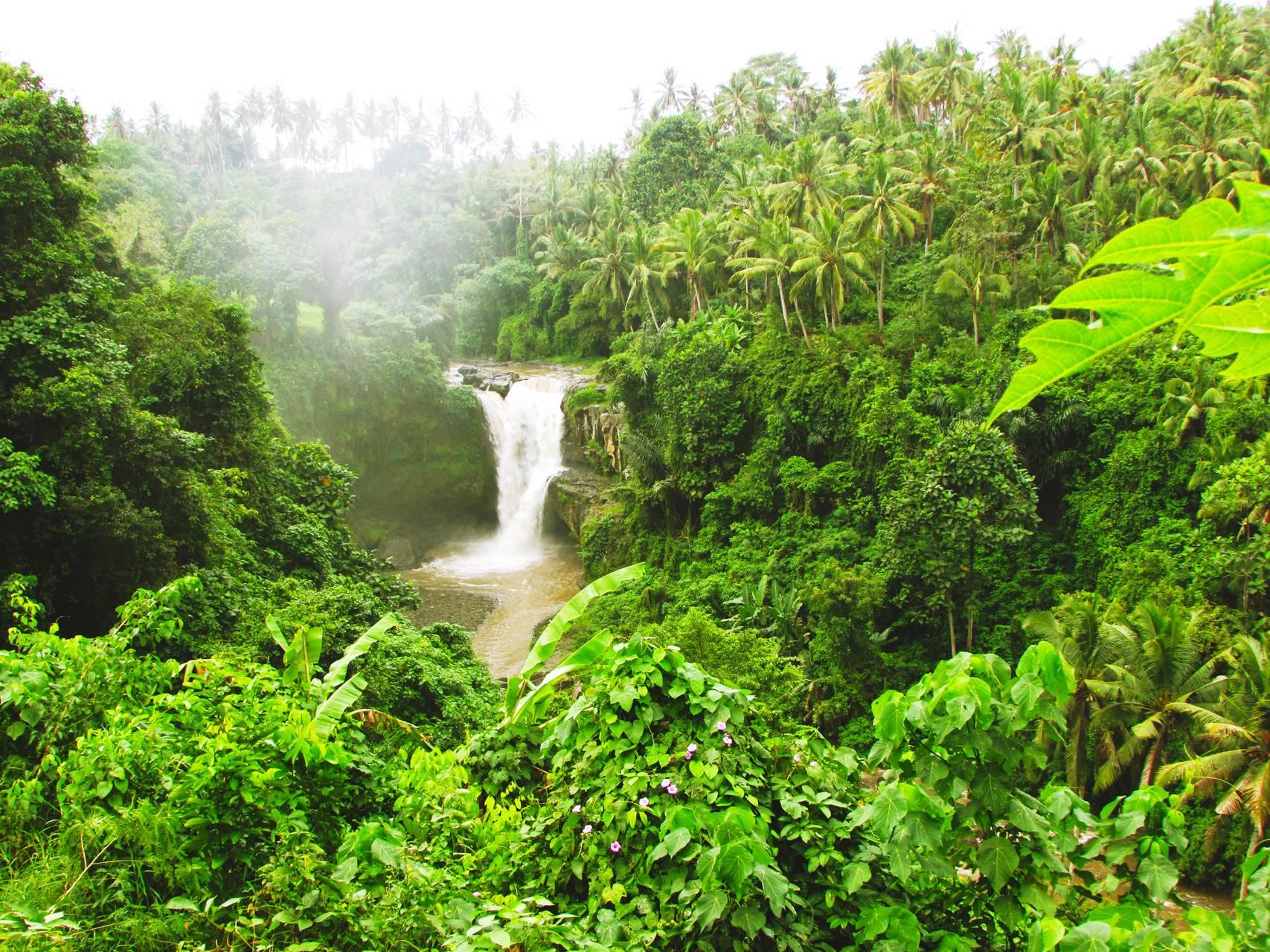 The Falls of Bali