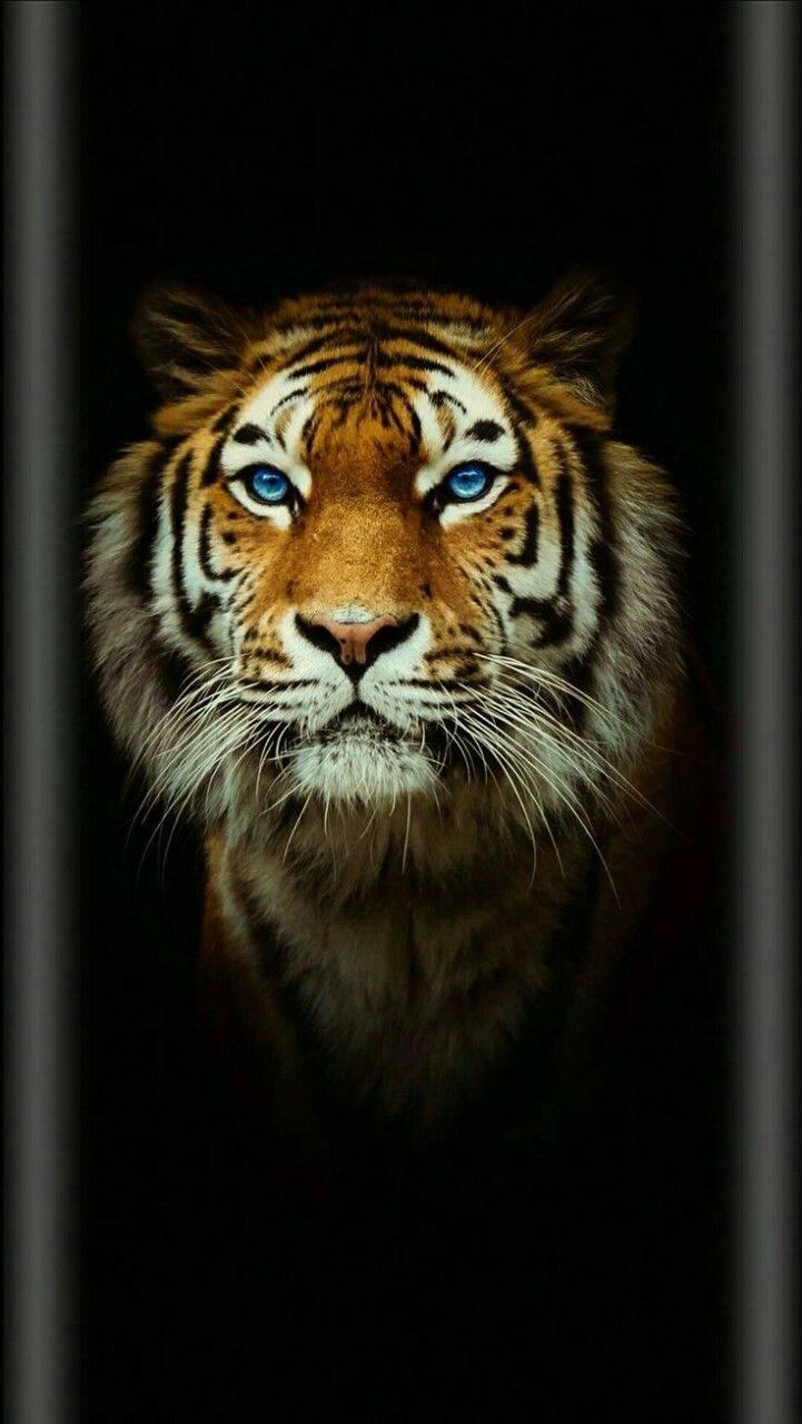 Black Tiger Wallpaper By Badgirlllllllllll 6e Free On Zedge