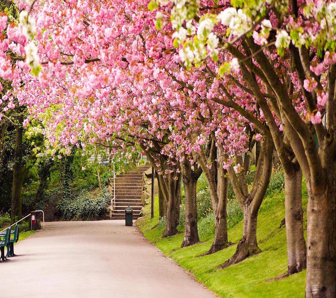 Tree Bloosom Pink