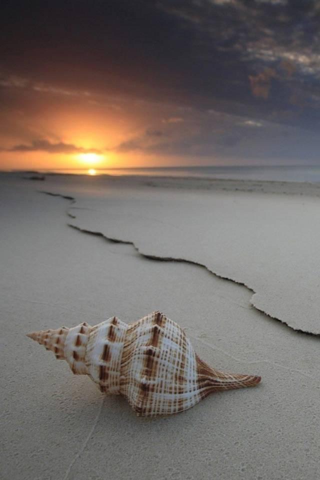 Seashell And Sunset