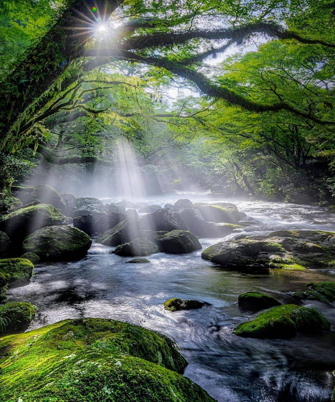 Sunshine stream