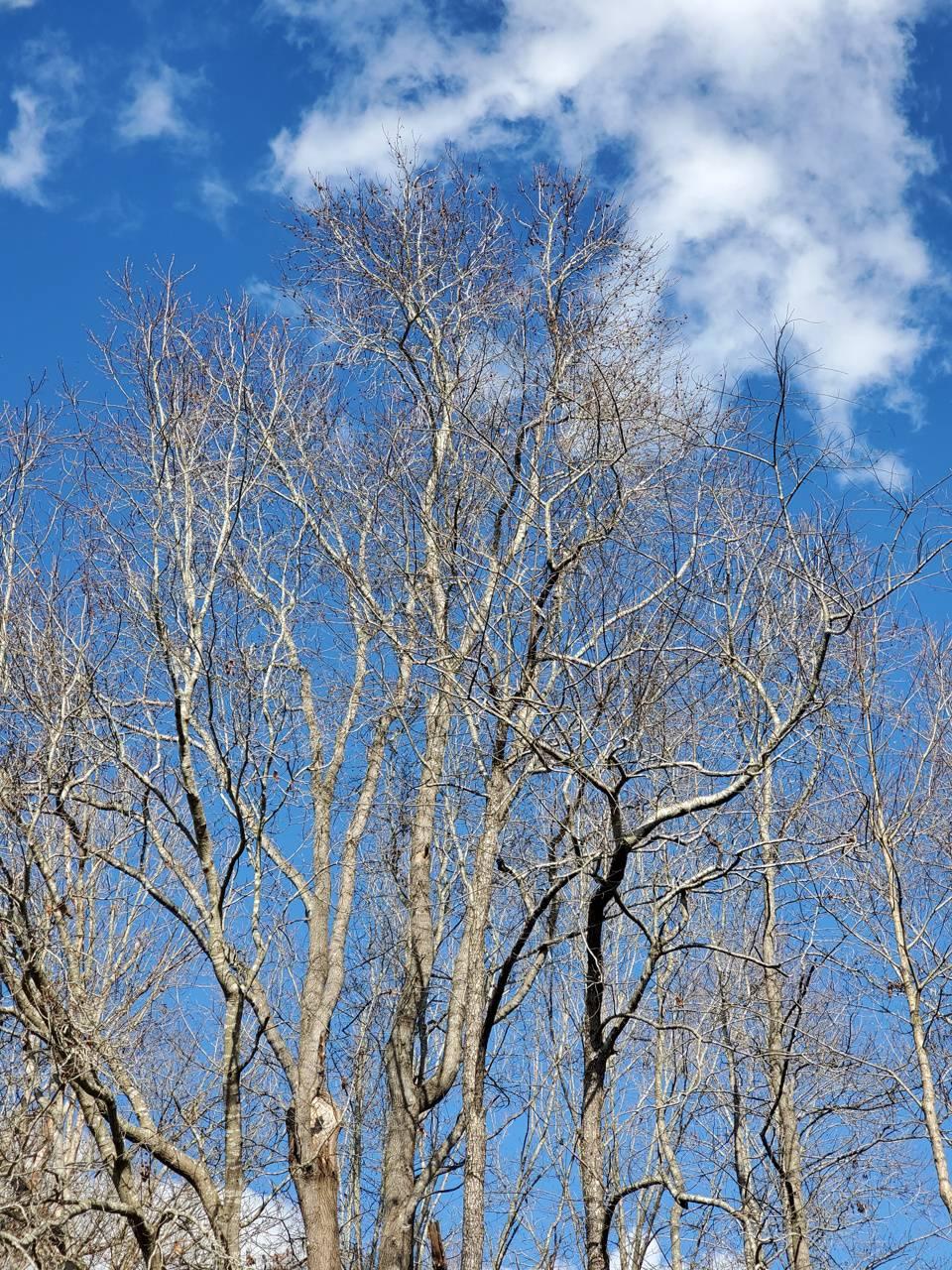 Clouds n Trees