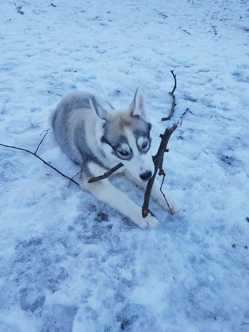 Nalou in the snow