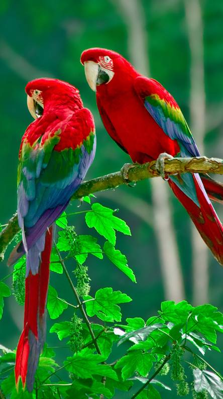 Parrot Wallpapers - Free by ZEDGE™