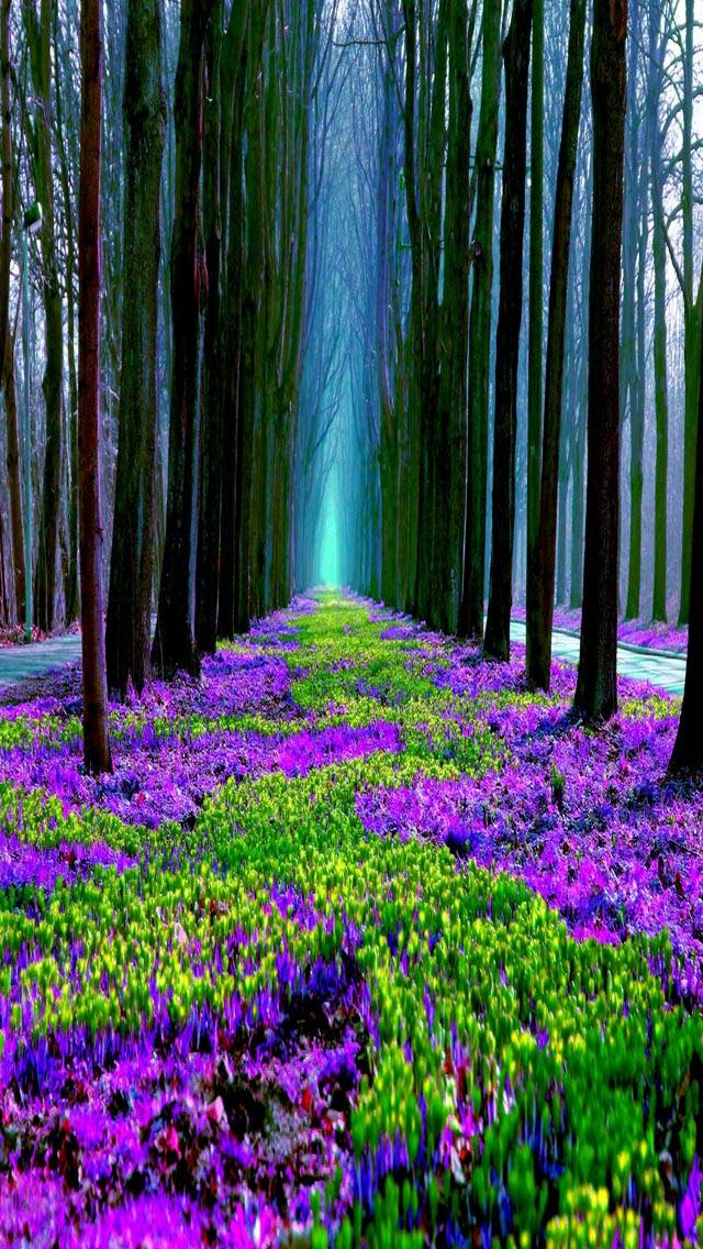 Scented Forest Floor