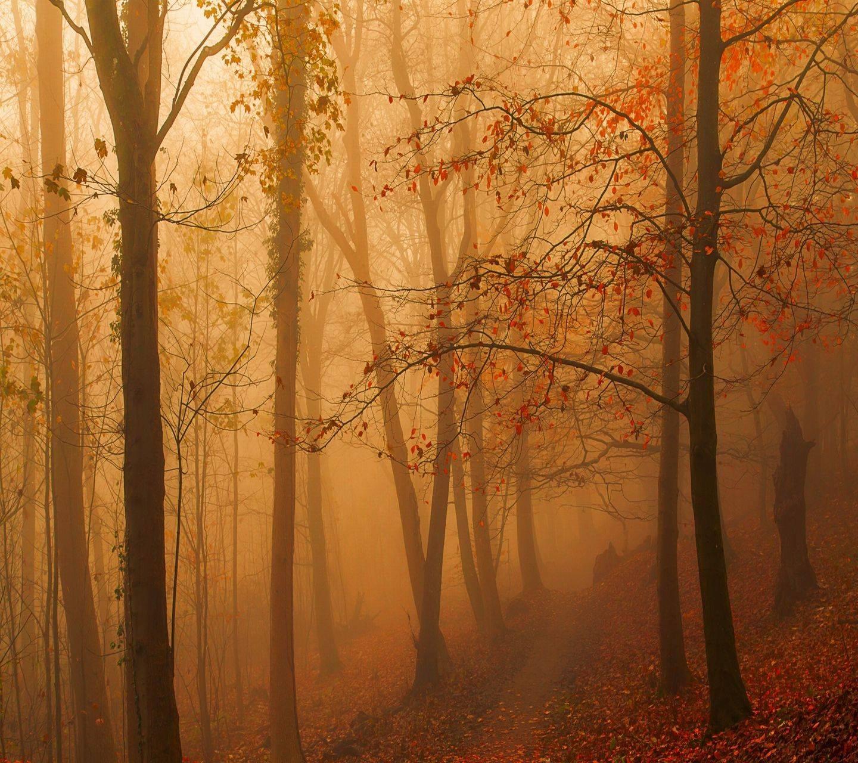 fog forests