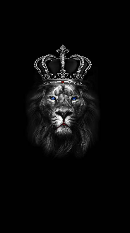 Lion Wallpapers Free By Zedge