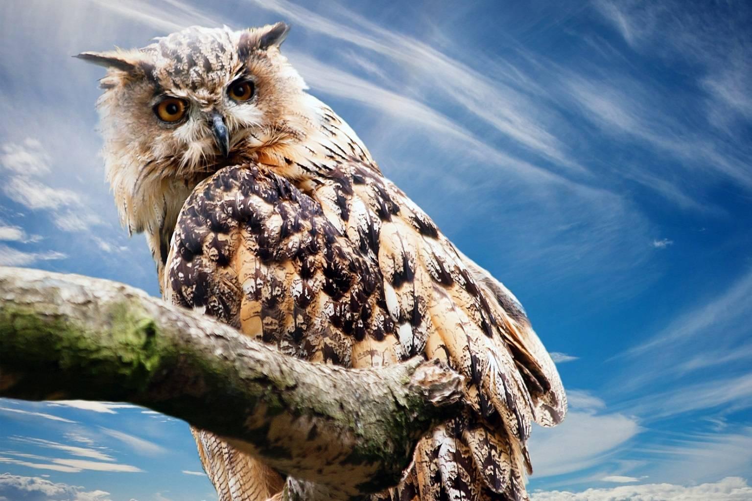 The Owl said
