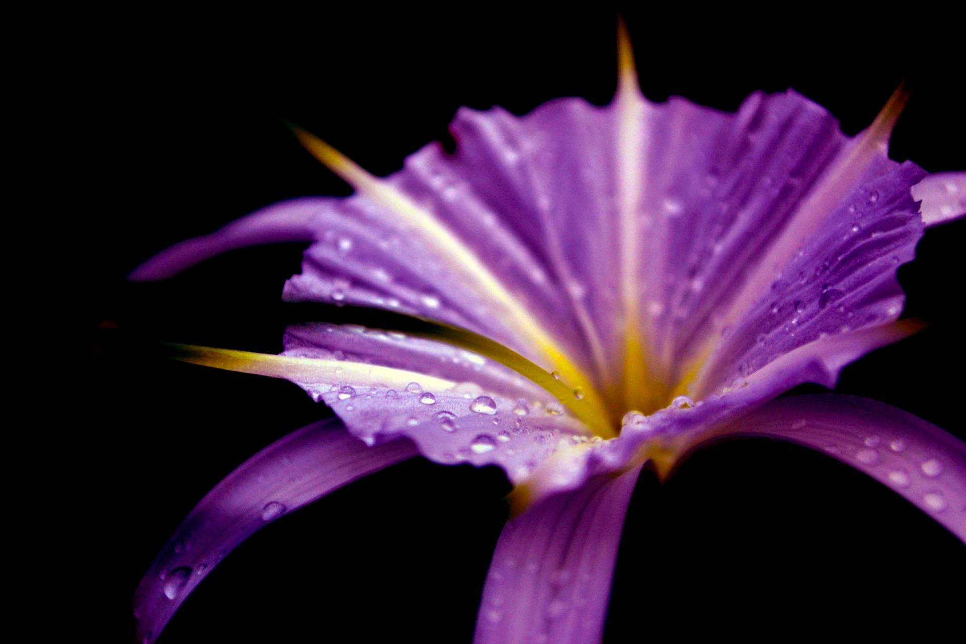 Beauty of rain