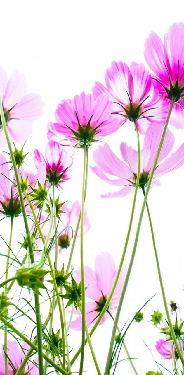 Vector Summer Flower