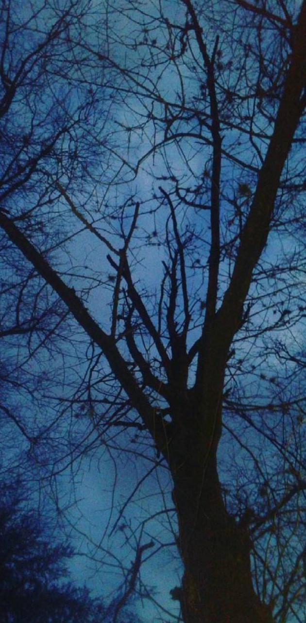 Blue nigth