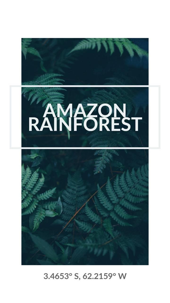 Amazon Rainforest