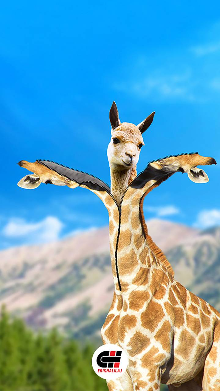 Giraffe-erikhalilaj
