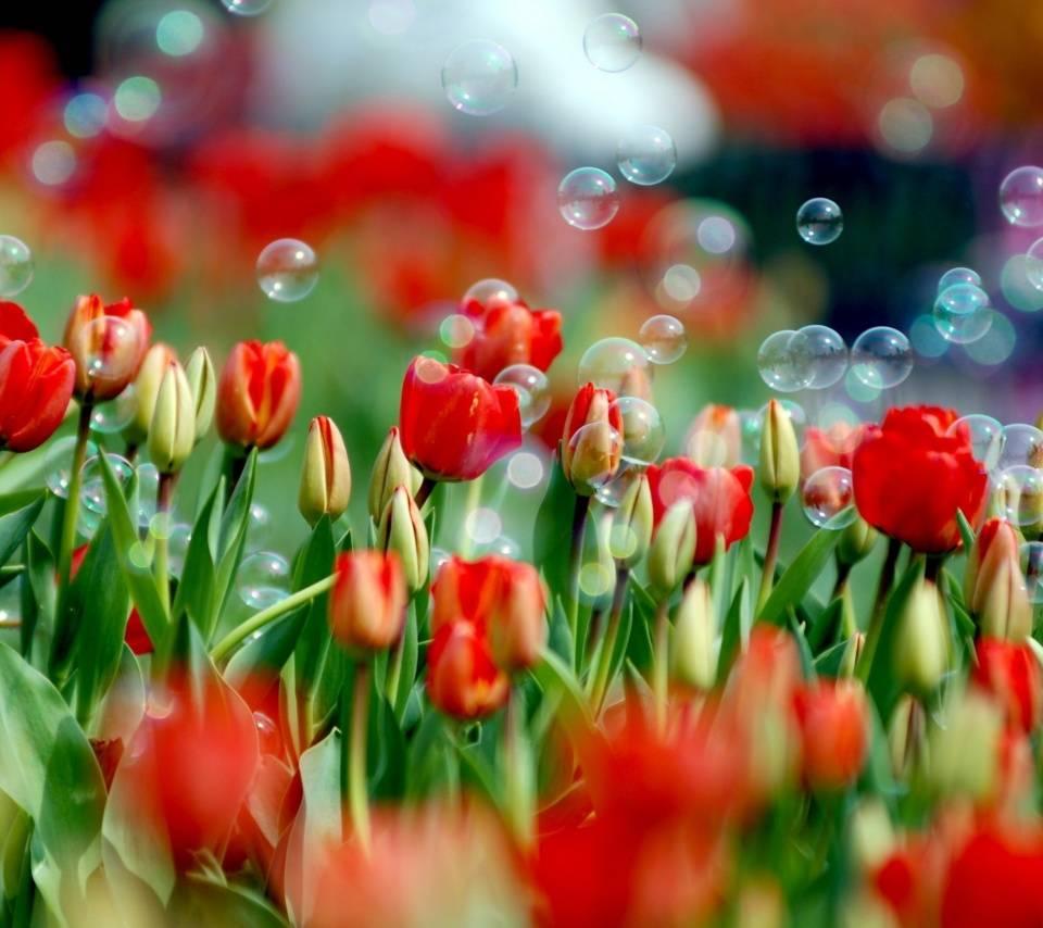 tulips n bubbles