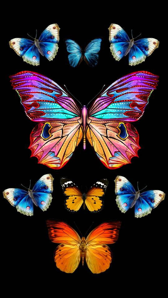 Colorful Butterfly Wallpaper By Frazoni Ac Free On Zedge