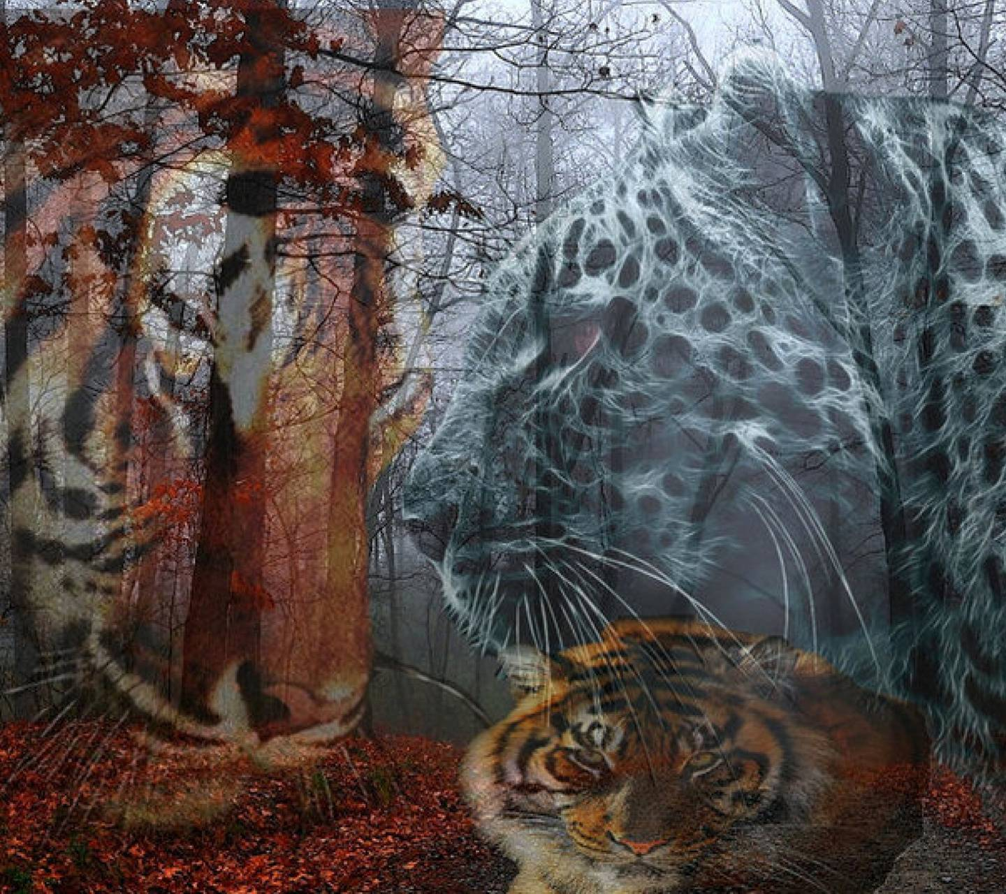 Tiger and Leopard