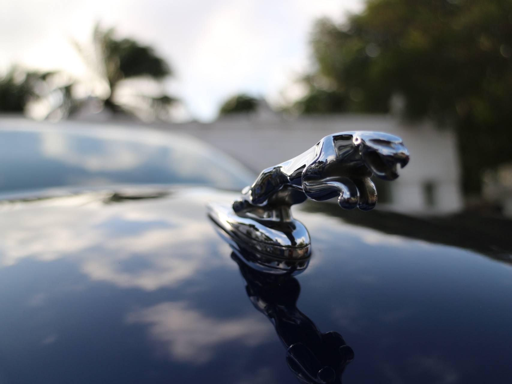 Jaguar hood ornament