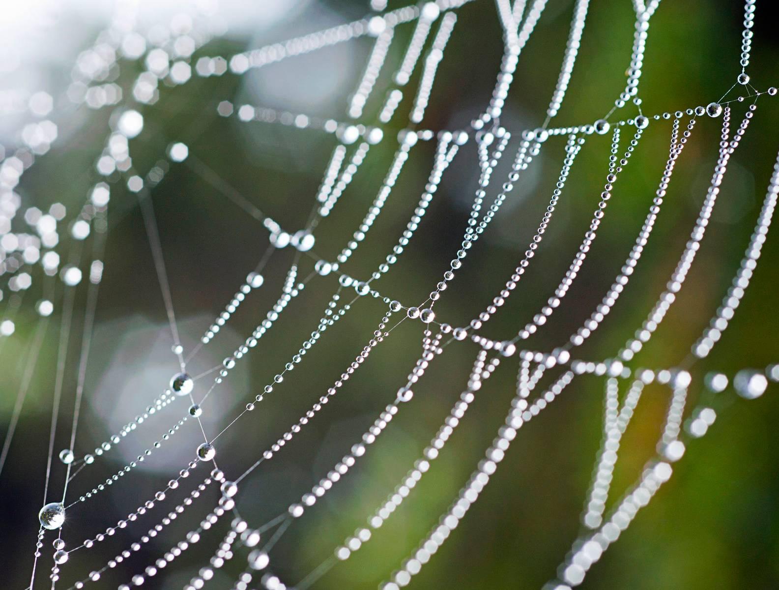 Nature Spider