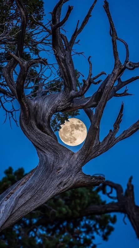 Luna y arbol
